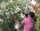 Mê mẩn với loài hoa dã quỳ trắng tinh khôi độc đáo tại Đà Lạt