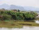 Mãn nhãn trước vườn chim hàng nghìn con bên sông Hoàng Long