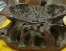 Thực hư hộp sọ người ngoài hành tinh xuất hiện tại Trung Quốc
