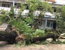 TPHCM: Ngày 27/11, hàng ngàn học sinh tiếp tục nghỉ học
