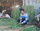 Lâm Đồng: Dạy nghề miễn phí cho gần 1.300 người dân tộc thiểu số