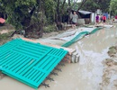 Ninh Thuận mất trắng hơn 200 tỷ đồng vì bão số 9