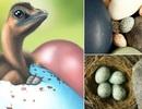 """Trứng chim hiện đại có màu sắc """"di truyền"""" từ… khủng long"""