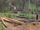Ban Quản lý rừng Đắk Đoa trục lợi và chi sai hơn 5,3 tỉ đồng