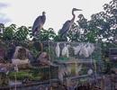 Chim hoang dã bị bày bán, làm thịt công khai bên đường Hà Nội