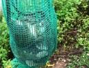 Quảng Ngãi: Săn chuột đồng mùa lũ, kiếm 400.000-500.000 đồng/ngày