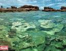 Khám phá vẻ đẹp hoang sơ của An Thới với dải san hô đẹp nhất Việt Nam