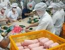 Hiểm họa từ kháng sinh sử dụng bừa bãi trong chăn nuôi