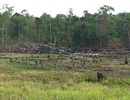 """Ban quản lý rừng Ayun Pa """"làm mất"""" hơn 550 ha rừng, chi sai hơn 1,6 tỷ đồng"""