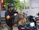 Hà Nội dự kiến gắn chip để quản gần 500 nghìn con chó nuôi