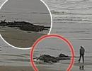 Vật thể lạ nghi là quái vật biển xuất hiện trên bờ biển Mỹ