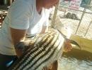 """Chong đèn đi bắt cá """"khủng"""" trên dòng dòng Sê San"""
