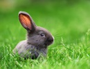 """Biến cây trồng trong nhà thành """"máy lọc không khí"""" nhờ DNA của… thỏ"""