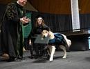 Chú chó được ĐH danh tiếng Mỹ trao bằng tốt nghiệp danh dự
