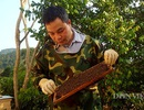 8X xứ Lạng thu trăm triệu đồng/năm từ nuôi ong mật