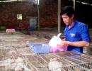 Chàng trai trẻ nuôi thỏ, nuôi trùn Ấn Độ, lãi 12 triệu/tháng