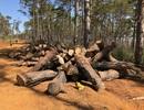 """Chủ tịch xã nhận hối lộ để """"làm ngơ"""" việc phá rừng cộng đồng"""