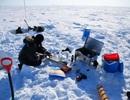 Tảo băng biển sinh trưởng mạnh trong bóng tối