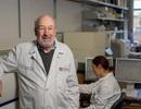 Vắcxin ung thư loại bỏ khối u ở chuột