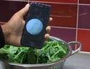Công cụ giá rẻ để phát hiện vi khuẩn trong thực phẩm và nước