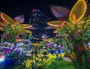 Ngắm đường hoa Nguyễn Huệ lung linh về đêm
