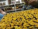"""Loài trà """"thần dược"""" bị săn tìm như báu vật, giá đắt đỏ 2 triệu đồng/kg"""