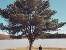 """Chinh phục """"cây cô đơn"""" - điểm cắm trại cuối tuần lý tưởng ở Đà Lạt"""