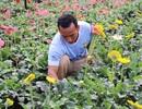 Chật vật với cà phê, chuyển qua trồng hoa bỏ túi 15 triệu đồng/tháng