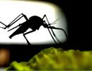 Muỗi có thể tiếp thu tốt hơn chúng ta tưởng