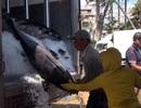 Ngư dân thu chục triệu đồng trong chuyến biển ngày tết