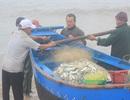 Ngư dân trúng đậm lộc biển đầu năm mới