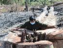 """15ha rừng ngay cạnh chốt bảo vệ bị """"xóa sổ"""" gọn gàng!"""