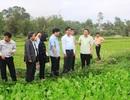 Nông dân Quảng Trị phấn khởi ra đồng sản xuất đầu năm mới