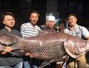 """Chi hàng chục triệu đồng mua cá hô để... """"ăn cầu may""""!"""