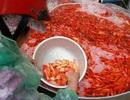 Lùng khắp miền Bắc gom 5 tấn chép đỏ: Chỉ một ngày lãi 100 triệu đồng