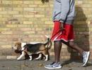 """Startup cung cấp dịch vụ """"dắt chó đi dạo"""" nhận 300 triệu USD vốn đầu tư"""