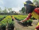 Giới trẻ miền Tây hào hứng tạo dáng ở làng hoa Sa Đéc