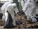 Khẩn cấp ngăn chặn các chủng cúm áp sát Việt Nam