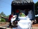 Hơn 27000 người nghèo được cấp gạo cứu đói ăn tết