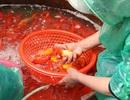 Cá chép đỏ rực chợ đầu mối Hà Nội trước ngày ông Táo chầu trời
