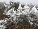 Hình ảnh Sa Pa chìm trong băng giá ngày cận Tết