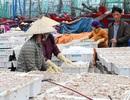 Ngư dân trúng đậm cá trỏng sau Tết, thu về hàng trăm triệu đồng