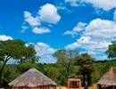 Bắt giữ hai phụ nữ ăn thịt người ở Zimbabwe