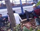 Truy tìm xe tải chở bò chết đi bán