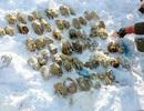 Đường đi của 54 bàn tay bị chặt lìa vùi dưới tuyết