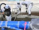 Đang làm rõ việc thực tập sinh VN dọn phóng xạ tại Fukushima