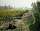 Thảm sát Mỹ Lai: Những hình ảnh ám ảnh suốt nửa thế kỷ