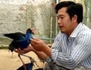 Quảng Ngãi: Nuôi nhiều giống chim quý, kiếm 150 triệu đồng/năm