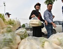 """Dân Hà Nội """"giải cứu"""" củ cải ế giúp nông dân"""