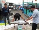 Đón Tết trên biển, ngư dân bỏ túi gần 20 triệu đồng/chuyến